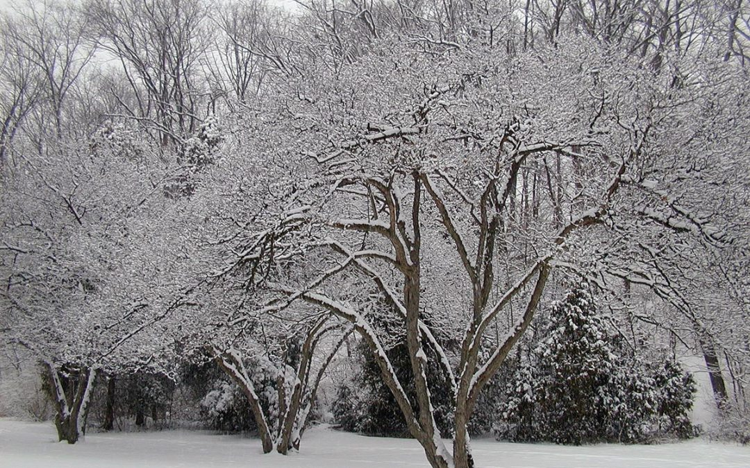 Snow-laced trees at Petrifying Springs