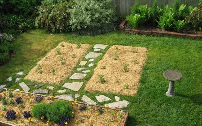 Alfalfa mulch on garden beds, Racine, Wisconsin