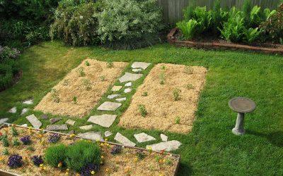Alfalfa mulch on garden beds, Racine, Wisconsin