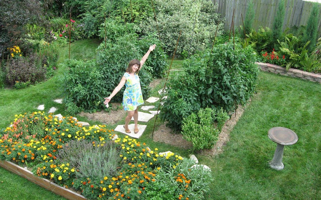 Backyard garden: 6-foot tomato plants, Racine, Wisconsin