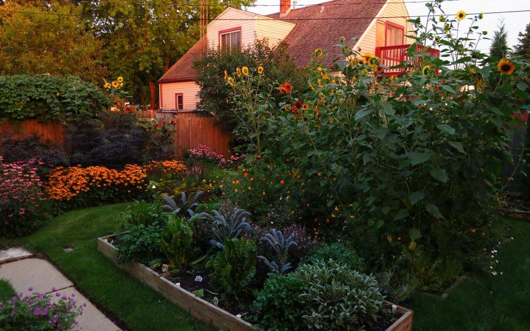 Backyard garden at dusk, end of August, Racine, Wisconsin