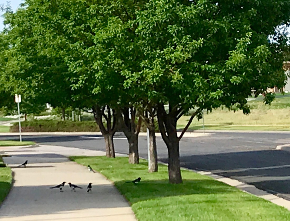 The birds gather together on occasion. The reason? I can only speculate as to why.