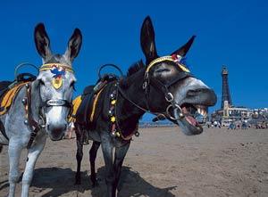 donkeys_75088a