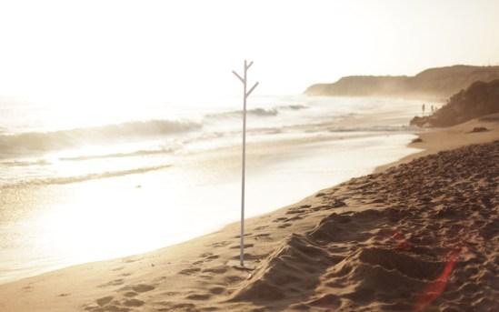 4th tree @ Crystal Cove State Beach, Laguna Beach, CA