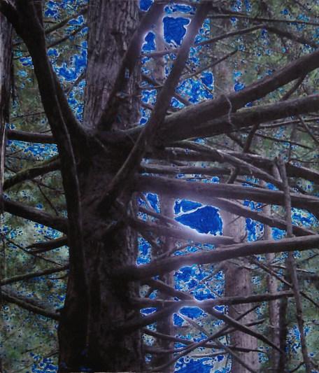 Tunitas Creek Blue
