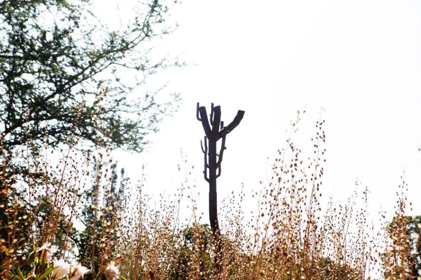 Madagascar Trees - Los Angeles Arboretum