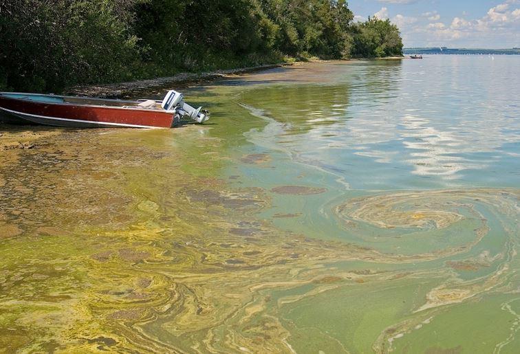 Algae in lakes