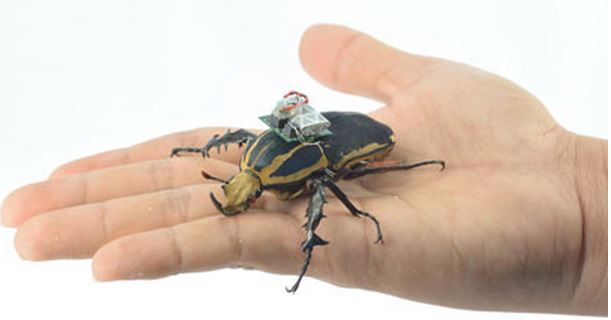 Beetle in a hand