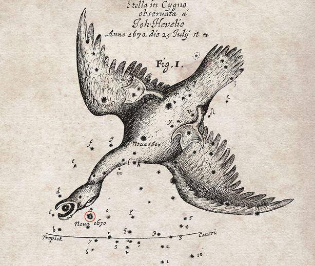 Star below the head of the swan