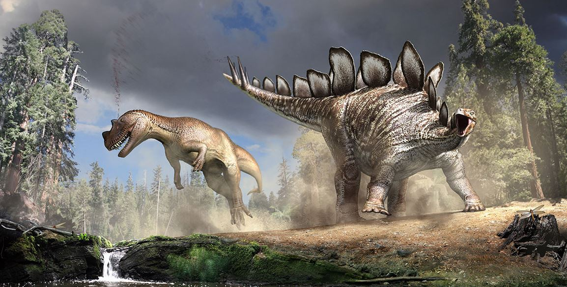 Stegosaurus fighting
