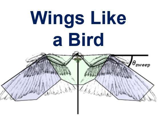 Wings like a bird