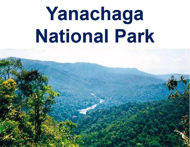 Yanachaga National Park Peru