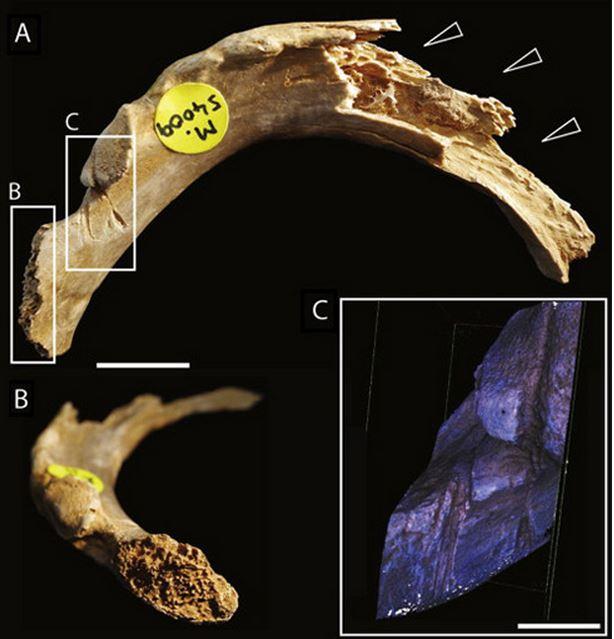Early Britons bones