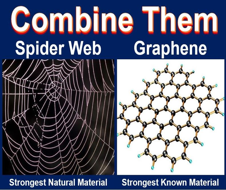 Graphene spider web