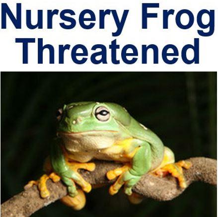 Nursery Frog extinction threat