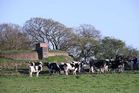 Dairy Farm UK