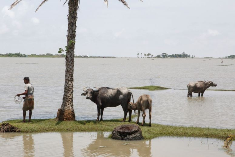 Bangladesh and climate change