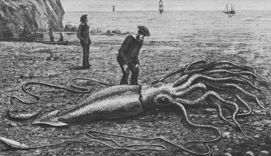 Giant squid in nineteenth century