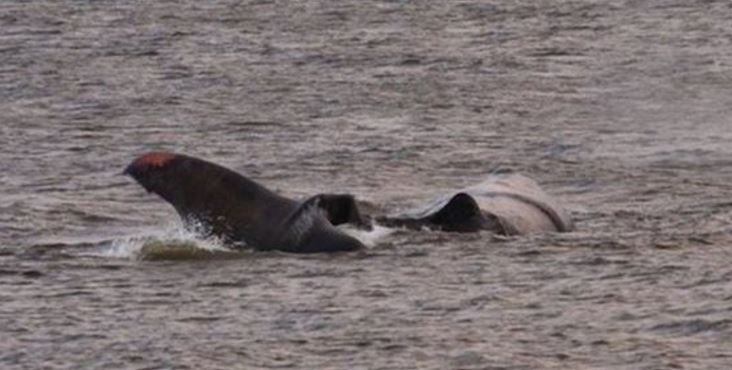 Beached sperm whale died on Friday night