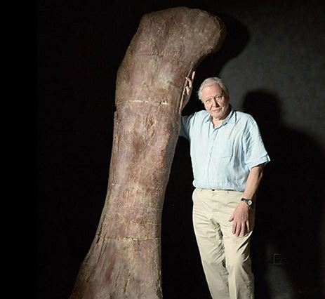 David Attenborough with dinosaur thigh bone
