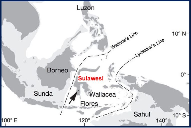 Map showing the island of Sulawesi in Indonesia