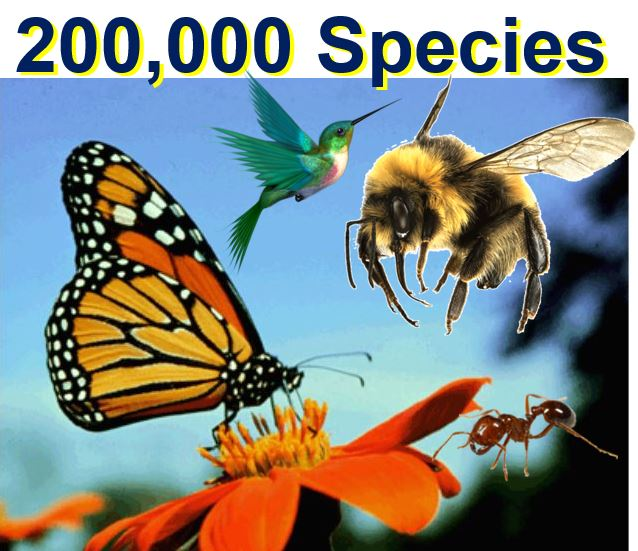 200000 species are pollinating animals