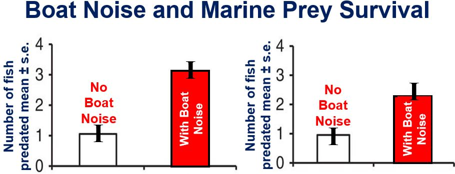 Boat noise and marine prey survival experiment