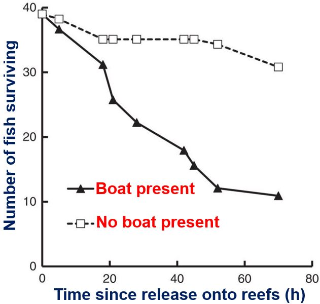 Boat noise and marine prey survival