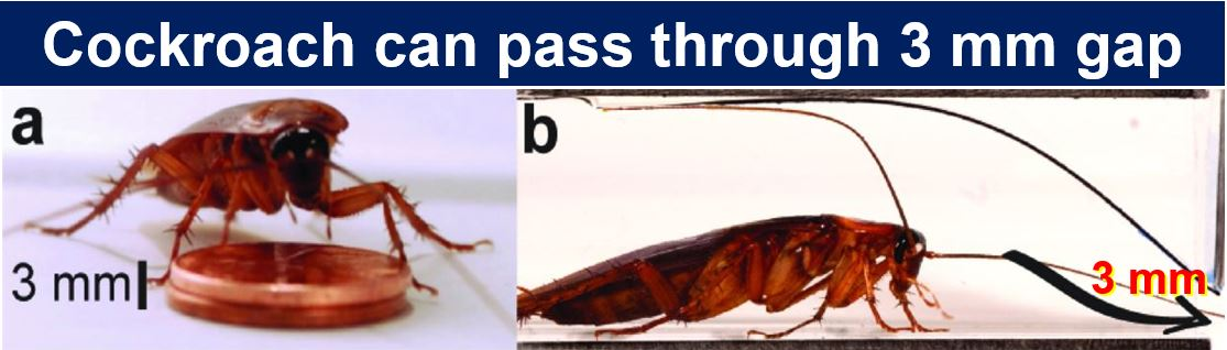 Cockroach can pass through 3 mm gap