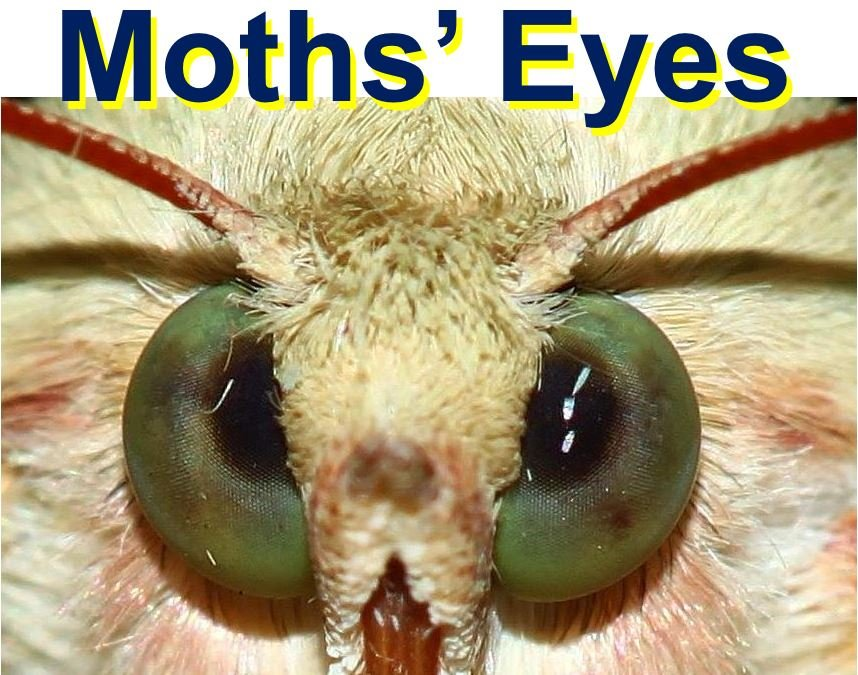 Inspiration from how a moth sees