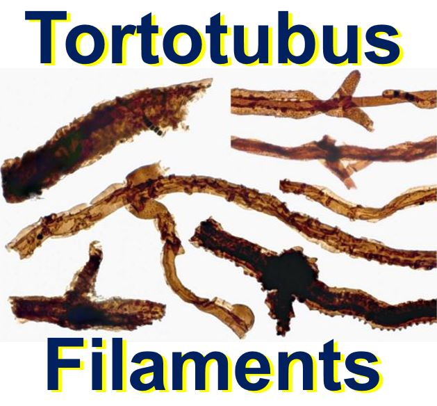 Fortotubus filaments fungi first organisms on land
