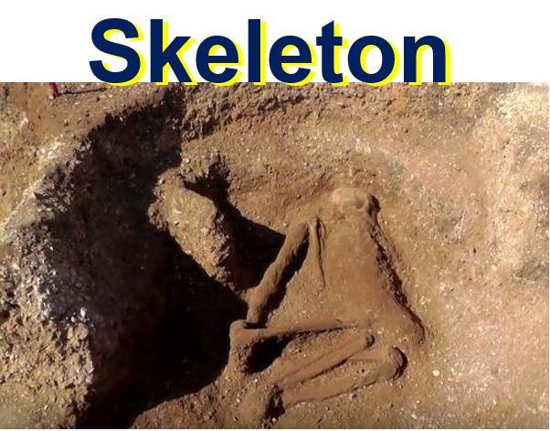 Human skeleton found at Iron Age graveyard