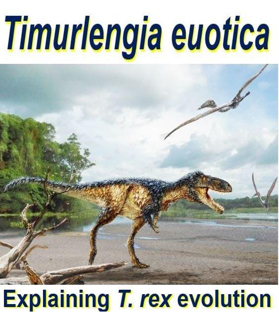 New species explains Tyrannosaurus rex evolution