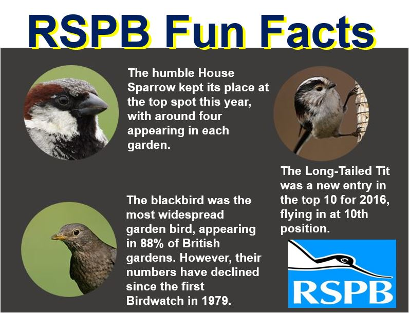 RSPB Fun Facts