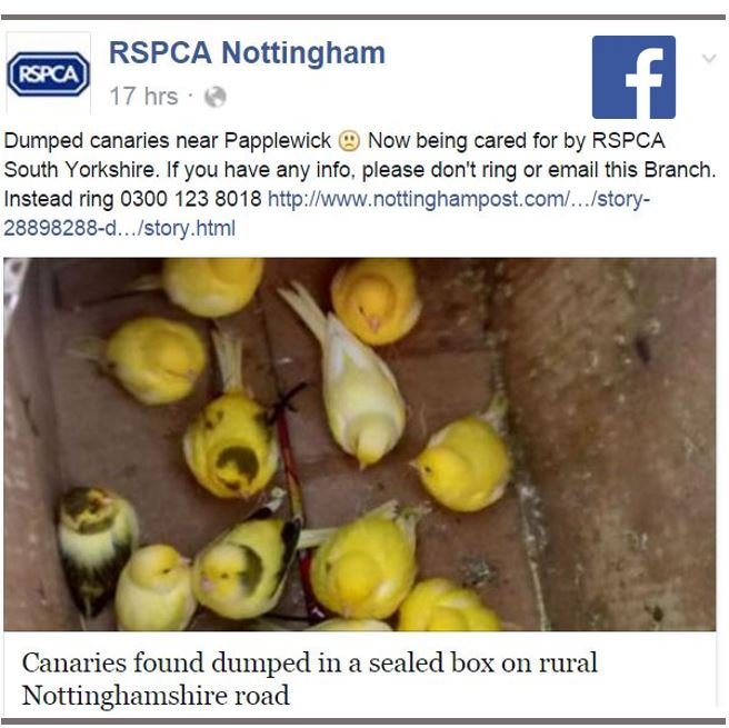 Seventeen canaries abandoned in box in cold night