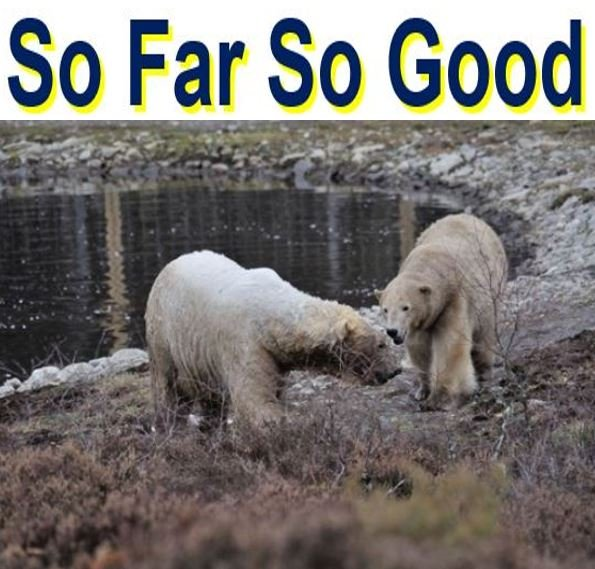 So far so good two polar bears bonding