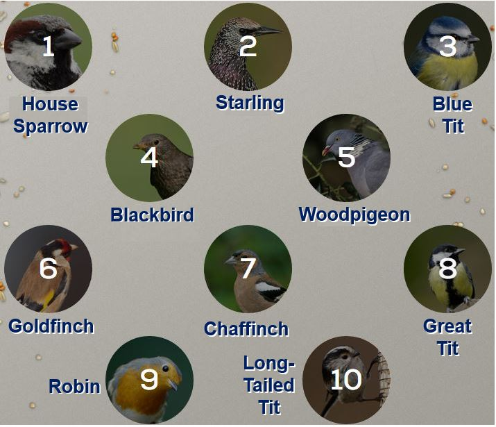 Top ten British garden birds