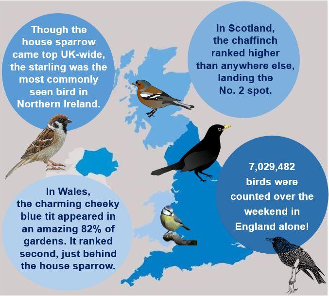 Bird Populations UK