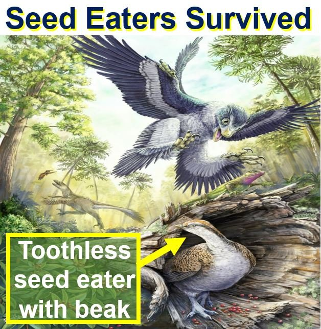 Birds survived if they ate seeds