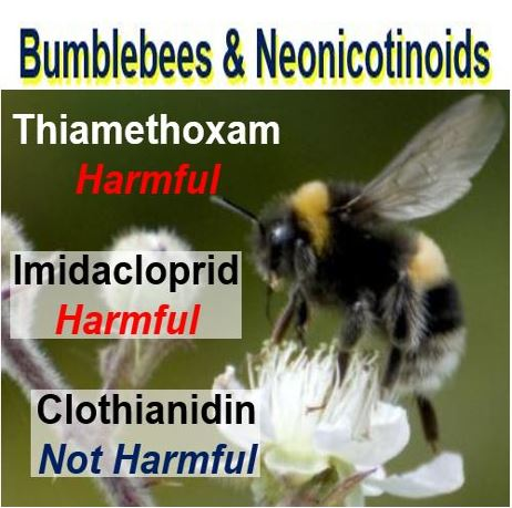Clothianidin not harmful for bees