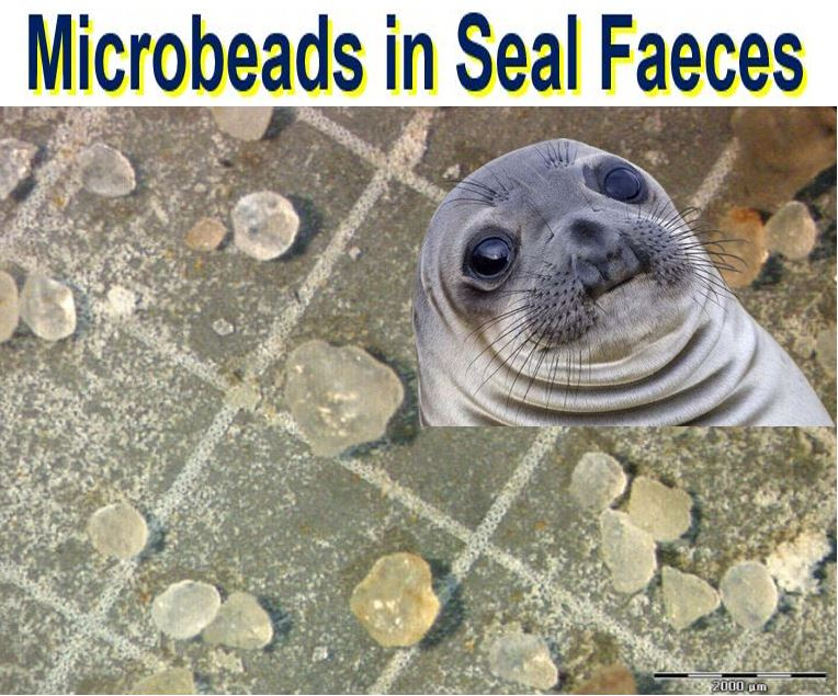 Microbeads in seal faeces