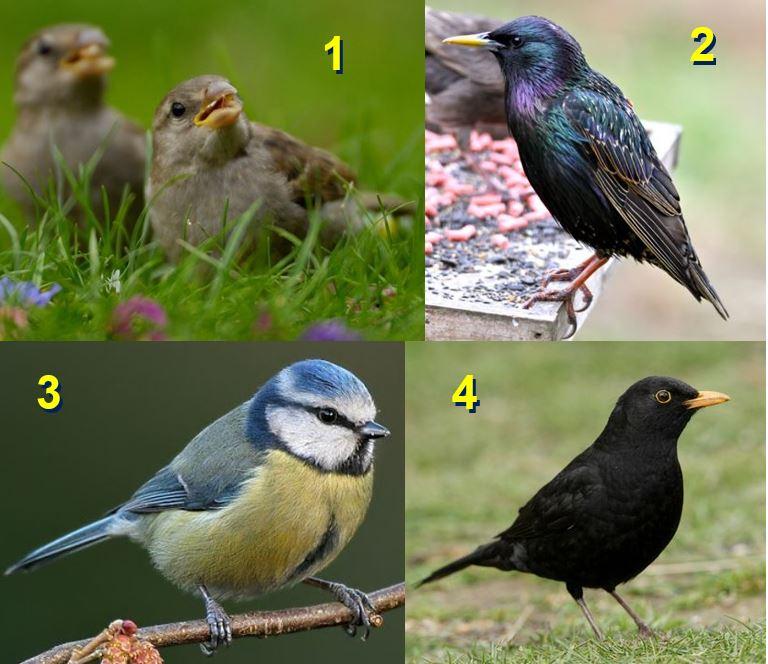 Most common garden birds in UK