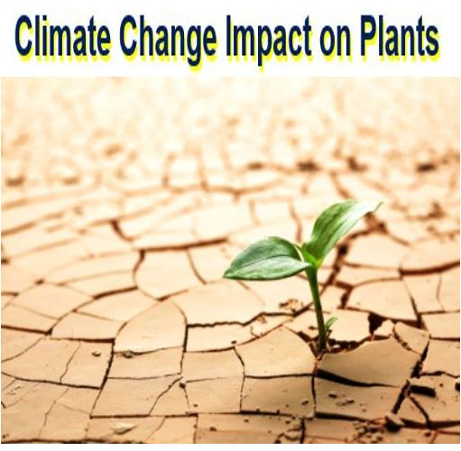 Climate change impact on plants