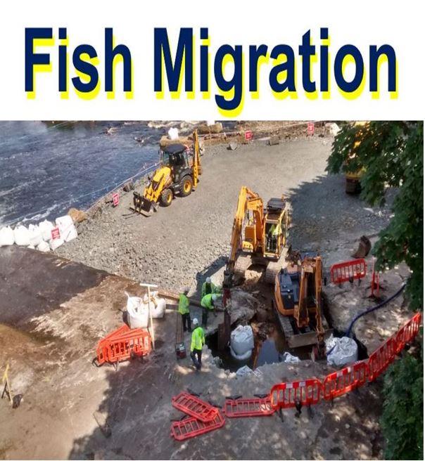 Fish Migration Hexham fish pass