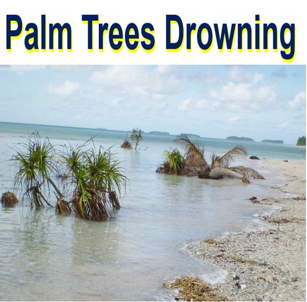 Palm trees drowning