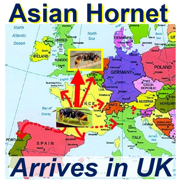 Asian Hornet arrives in UK