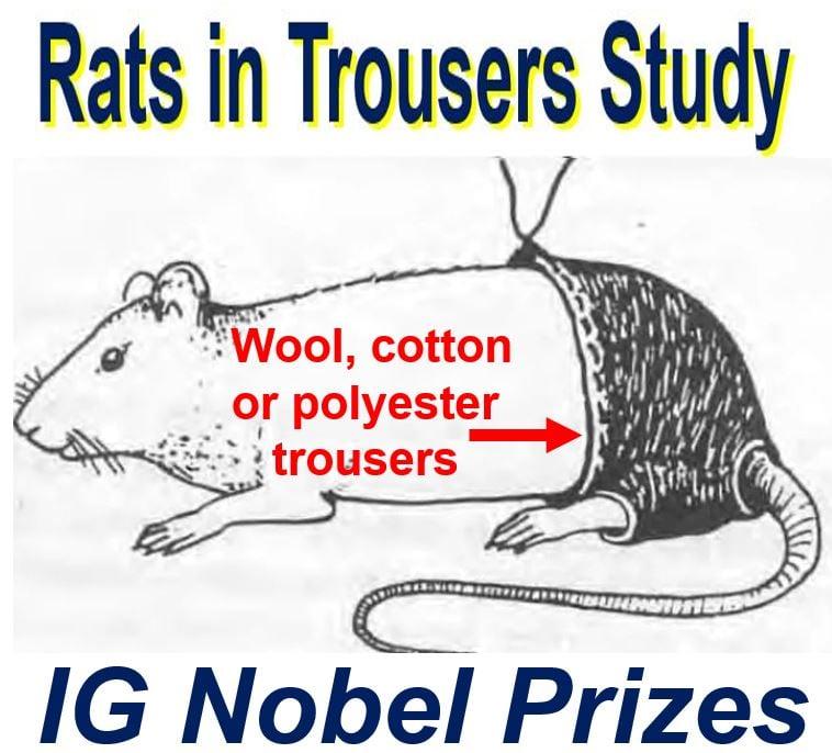 IG Nobel Prizes Rat Study
