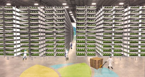 vertical farm example - AeroFarms
