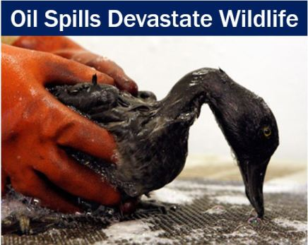Oil spills devastate wildlife