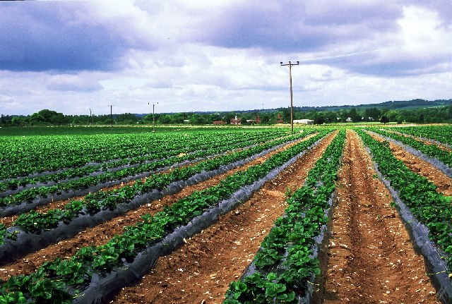 What is an agricultural robot (agribot)? Definition and